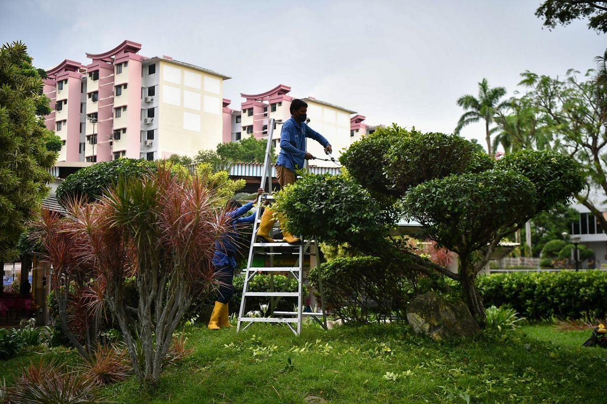 A worker pruning a tree outside Commonwealth Drive Food Centre on May 29, 2021.