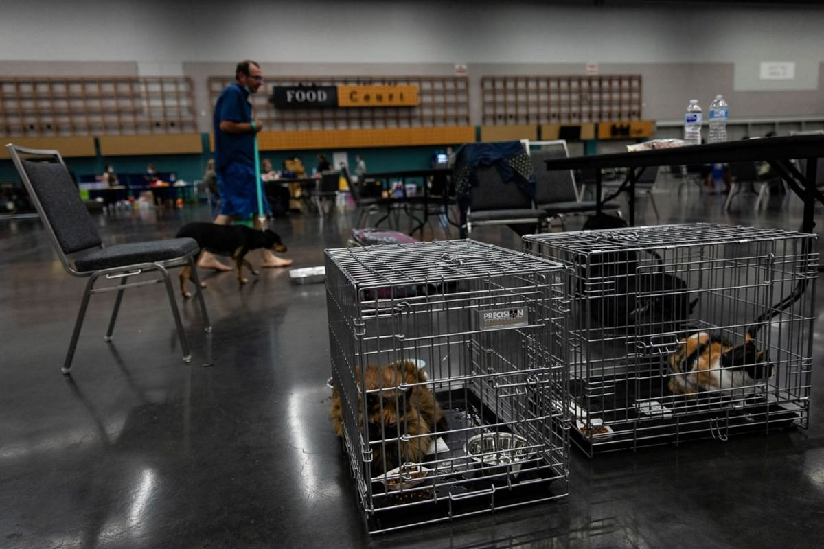 Pets sit in crates at a public cooling shelter set up at the Oregon Convention Center during a heatwave in Portland, Oregon, U.S., on  June 26, 2021.