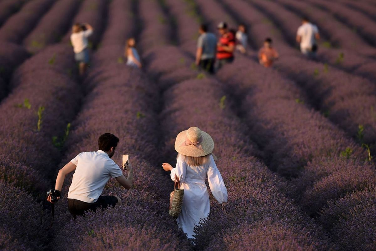 A photo issued on July 26, 2021, shows people walking along a lavender field near the village of Valea-Trestieni, some 30 km east of Chisinau, Moldova, on July 10, 2021.
