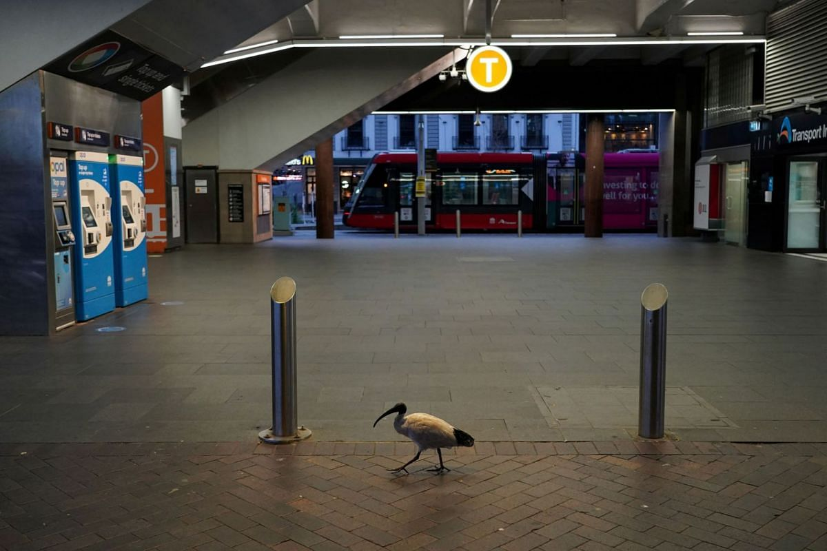 A lone bird walks past the quiet Circular Quay train station during a lockdown to curb the spread of the coronavirus disease outbreak in Sydney, Australia, July 28, 2021.