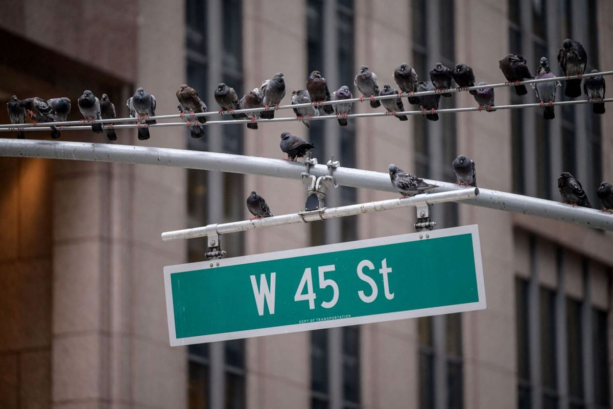 Pigeons sit on a road sign above a street in New York on July 29, 2021.