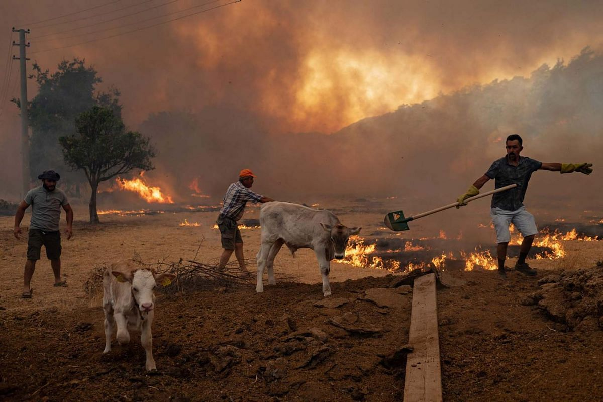 Men gather sheep to take them away from an advancing fire on Aug 2, 2021 in Mugla, Marmaris district, as the European Union sent help to Turkey and volunteers joined firefighters in battling a week of violent blazes that have killed eight people. Tur