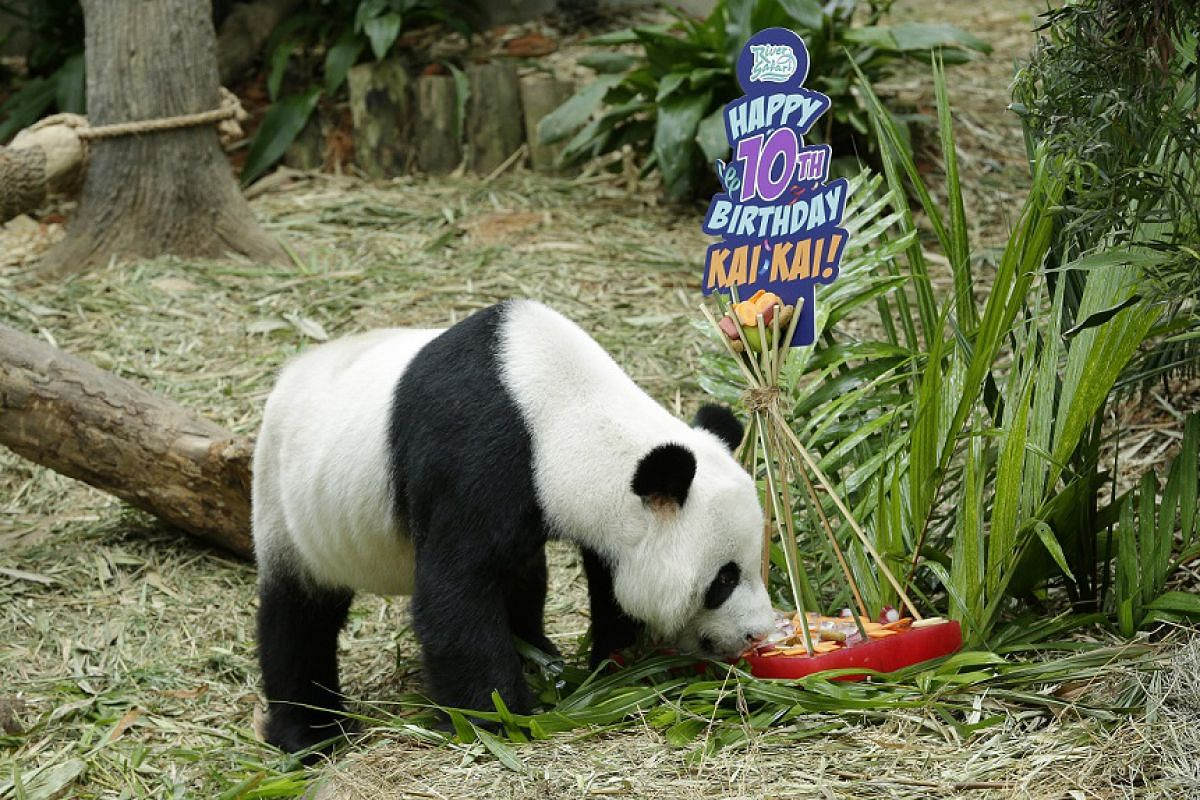 Kai Kai during birthday celebrations on Sept 6, 2017.