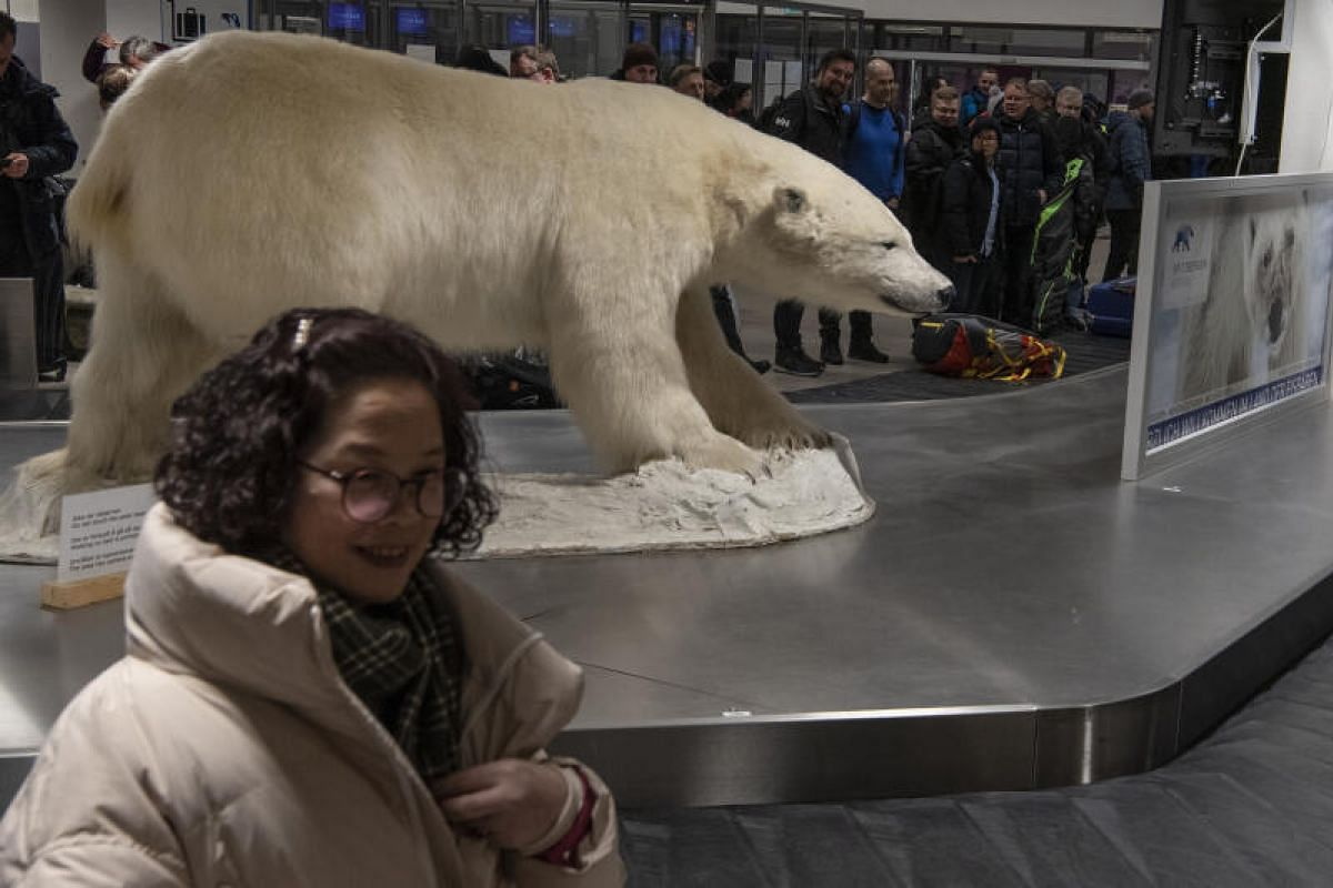 A tourist takes a picture with a model of a polar bear as she waits for her baggage at the Svalbard Airport on Feb 2, 2020.