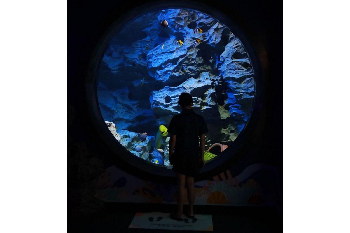 A view of an aquarium at S.E.A. Aquarium at Resorts World Sentosa.