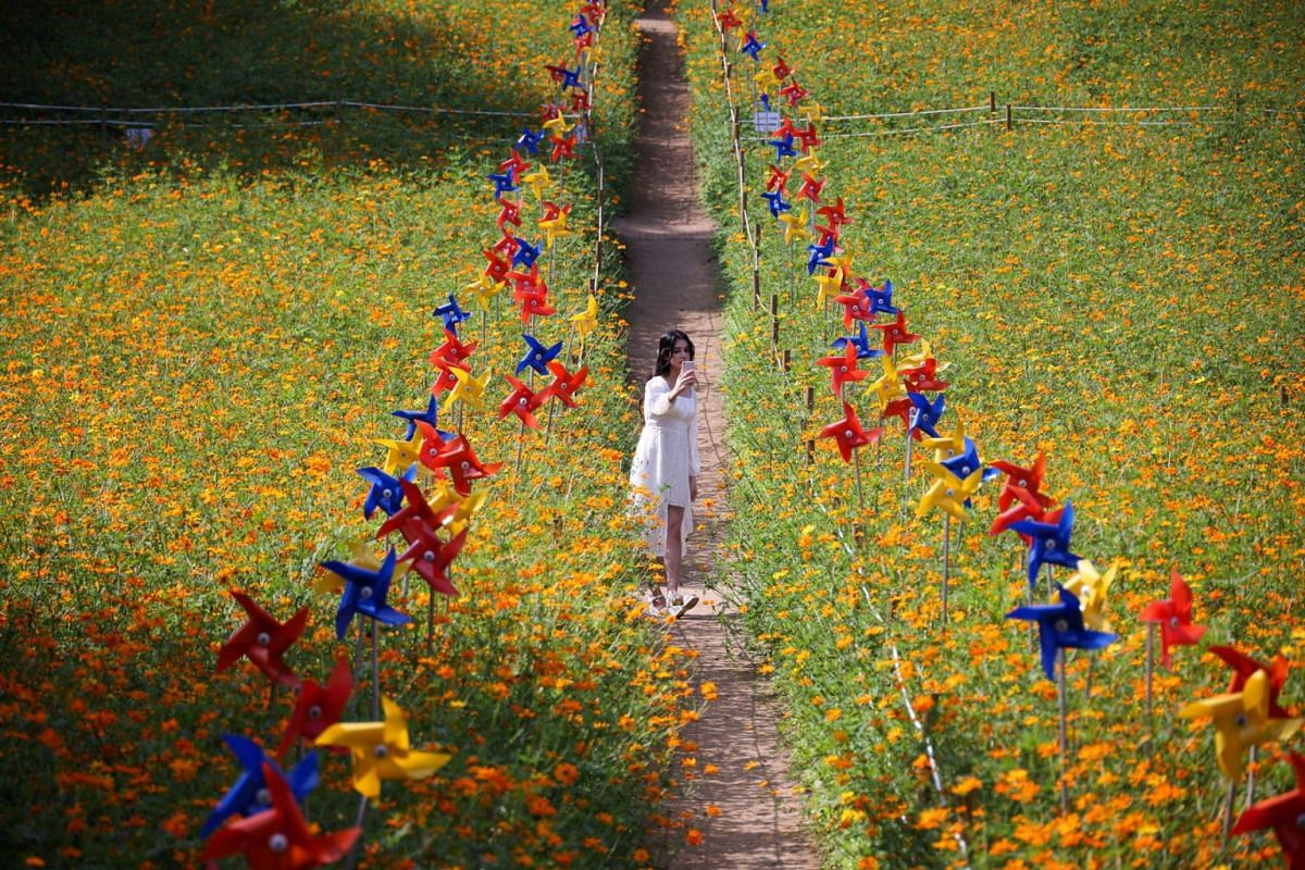 A woman takes a selfie amid a cosmos flower field at a park in Seoul, South Korea, September 13, 2021.