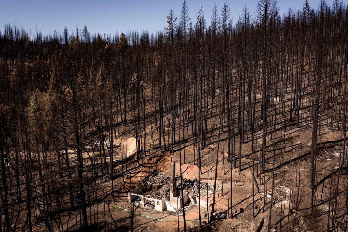 An aerial picture taken on September 24, 2021, shows a burnt home among burnt trees in Greenville, California. The Dixie fire has burned almost 1 million acres and remains at 94% containment after burning through 5 counties and more than 1,000 homes.