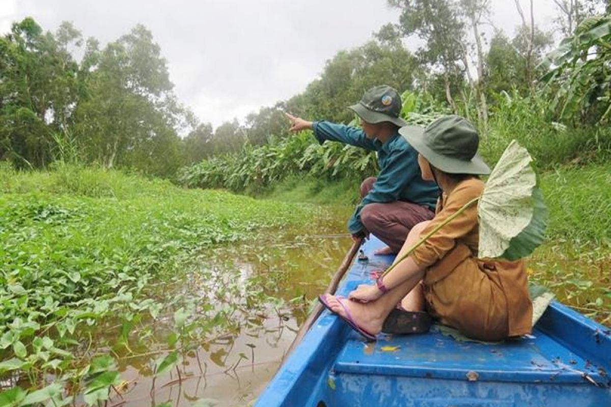 Tourists visit a melaleuca forest in U Minh Ha National Park.