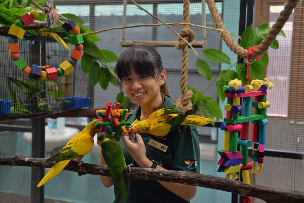 Ms Angelin Lim, the assistant curator of birds at Jurong Bird Park, with golden conures in the breeding and research centre.