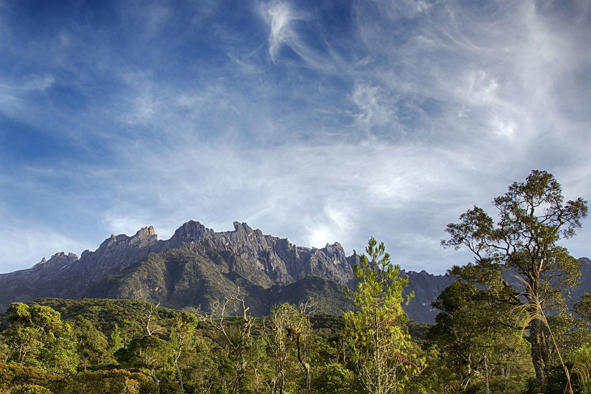 The Rothschild Slipper Orchid (right), which can be found on Mount Kinabalu (far right). Above: A herd of Bornean pygmy elephants foraging for grass on the waterfront. Right: The Deer Cave, in Gunung Mulu National Park, has the largest cave passage i