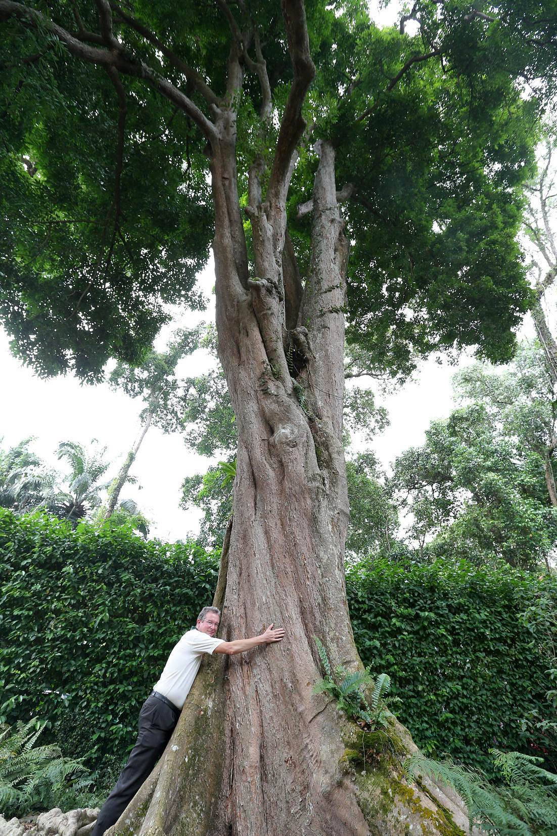 Get to know these 9 well-known Heritage Trees, Environment News